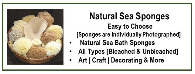 The ultimate online selection of natural sea sponges.