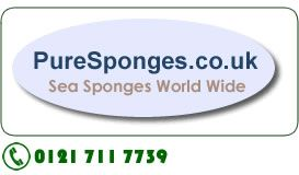 Best selection of natural sea sponges